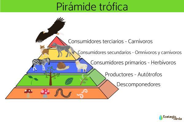 Consumidores secundarios: qué son y ejemplos - Cuáles son los consumidores primarios, secundarios, terciarios y cuaternarios