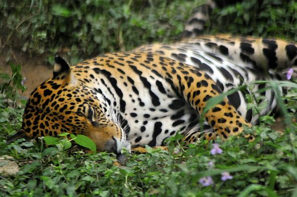 Problemas ambientales en el Ecuador - Pérdida de biodiversidad y recursos genéticos