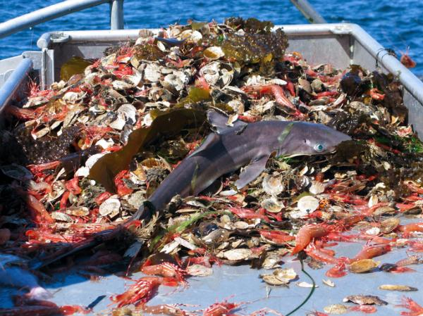Problemas ambientales en el Ecuador - Sobrepesca