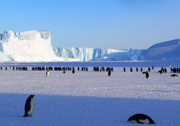 Factores bióticos y abióticos del desierto - Desierto Antártico