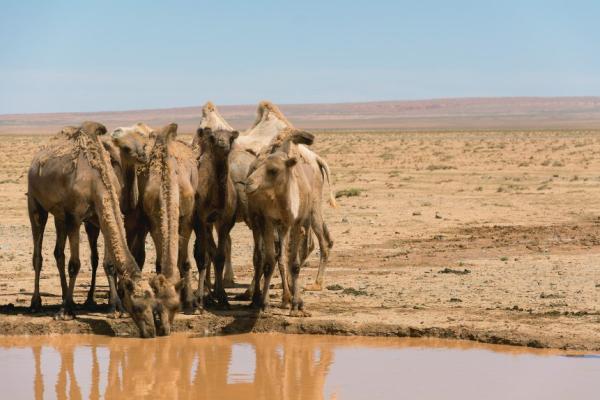 Factores bióticos y abióticos del desierto - Factores abióticos del desierto