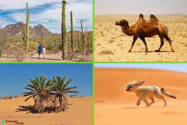 Factores bióticos y abióticos del desierto - Factores bióticos del desierto