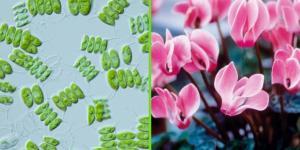 ¿Las plantas son unicelulares o pluricelulares?