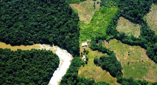 El problema de la tala indiscriminada de árboles en los bosques - Qué es la tala de árboles indiscriminada - definición sencilla