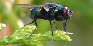 Para qué sirven las moscas