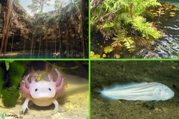 Qué es un cenote y cómo se forma - Flora y fauna de los cenotes