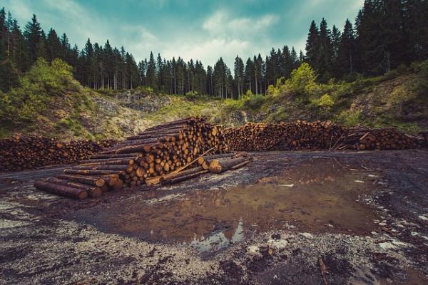 Cómo afecta el consumismo al medio ambiente - Deforestación, una de las consecuencias del consumismo en el medio ambiente más graves
