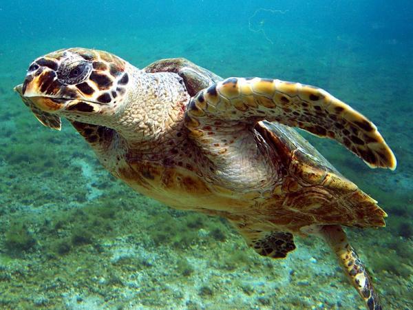 22 animales en peligro de extinción en Panamá - Otras especies animales en peligro de extinción en Panamá