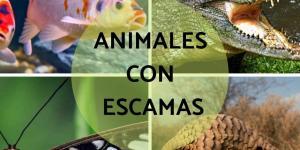 Animales con escamas: ejemplos con nombres e imágenes