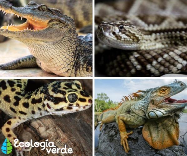 Animales con escamas: ejemplos con nombres e imágenes - Ejemplos de animales con escamas: nombres comunes y científicos