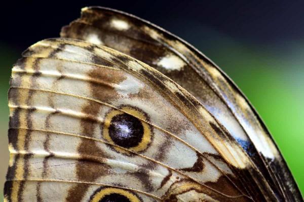 Animales con escamas: ejemplos con nombres e imágenes - Escamas de las mariposas