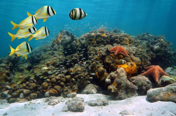 Tipos de biomas marinos - Qué son los biomas marinos y sus características