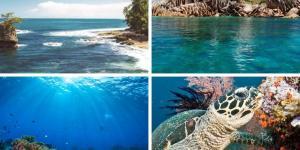 Tipos de biomas marinos