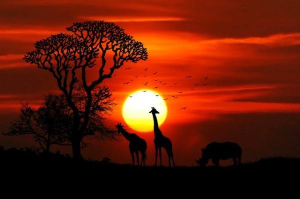 Animales en peligro de extinción en África - Animales mamíferos en peligro de extinción en África