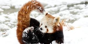 Animales en mayor peligro de extinción en Asia