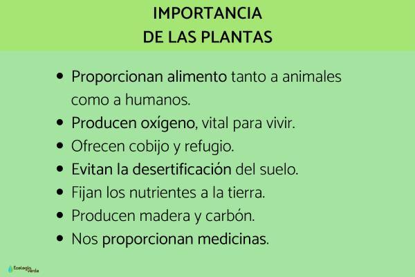 Qué son las plantas - Qué son las plantas y su función