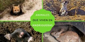 Animales que viven en madrigueras