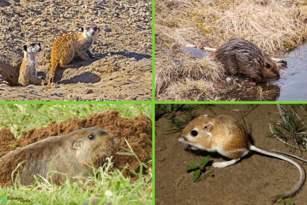 Animales que viven en madrigueras - Otros animales que viven en madrigueras