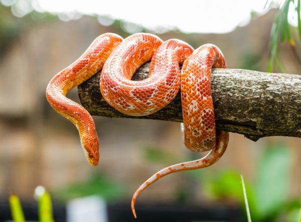 Diferencia entre reptiles y anfibios para niños - Características de anfibios y reptiles