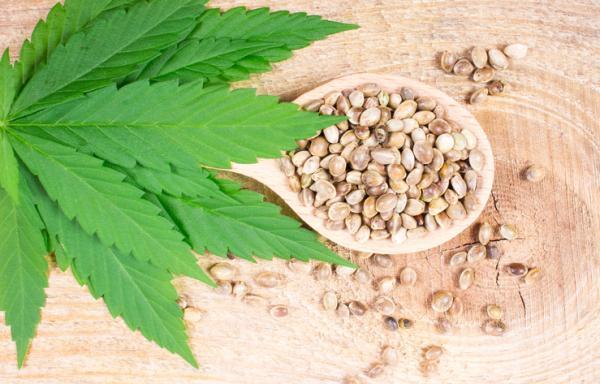 Tipos de semillas de marihuana y nombres - Principales tipos de semillas de marihuana