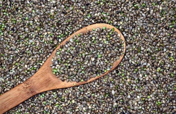 Tipos de semillas de marihuana y nombres - Tipos de semillas de marihuana índica