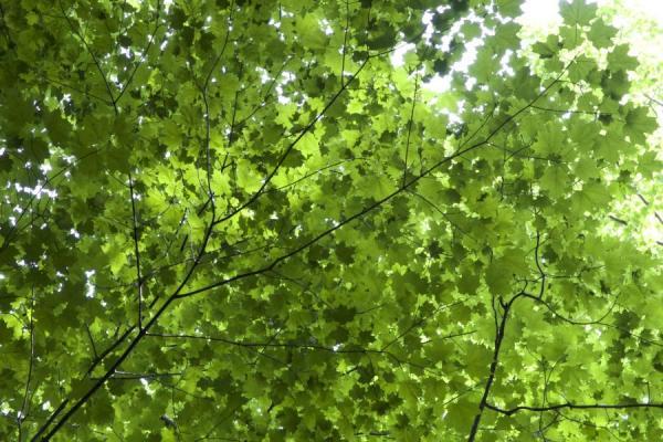 Partes de un árbol y sus funciones - Las hojas del árbol y sus funciones