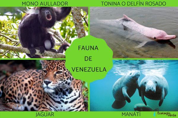 Flora y fauna de Venezuela - Fauna de Venezuela