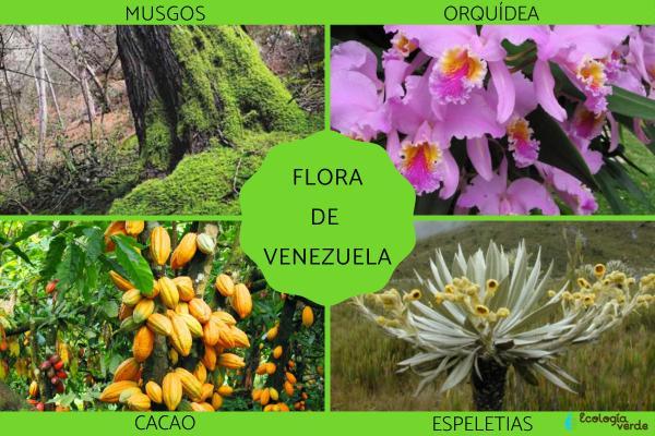 Flora y fauna de Venezuela - Flora de Venezuela