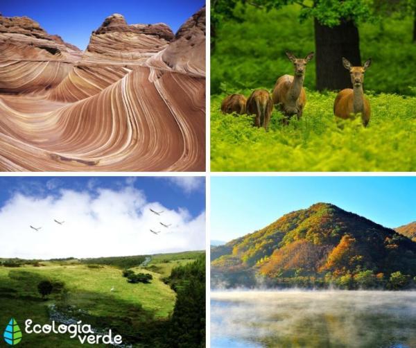Qué es el hábitat terrestre: definición, tipos y animales - Tipos de hábitat terrestres - ejemplos