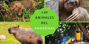 +30 animales del Amazonas