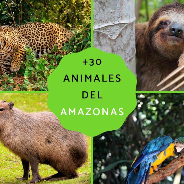 30 Animales Del Amazonas Lista De Nombres Y Fotos