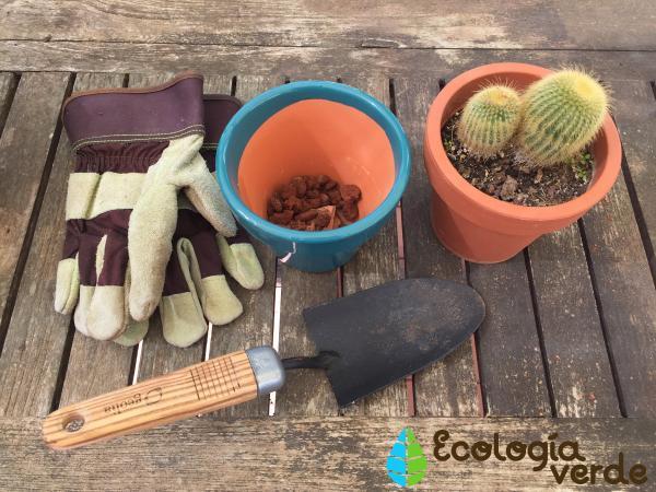 Plantar cactus: cómo hacerlo - Cómo plantar cactus en maceta - paso a paso