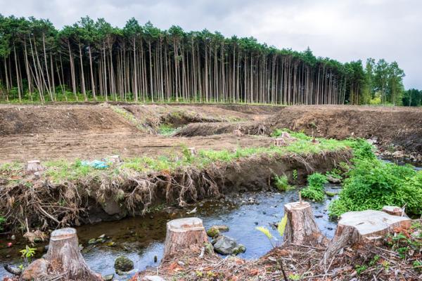 Ejemplos de cambios naturales y artificiales en los ecosistemas - Ejemplos de cambios naturales y artificiales en los ecosistemas y diferencias