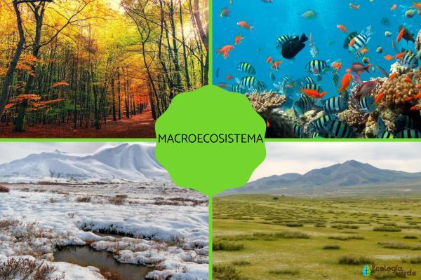 Microecosistema y macroecosistema: qué son y ejemplos - Ejemplos de macroecosistemas