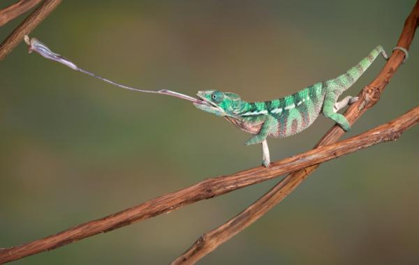 Animales insectívoros: qué son y lista de ejemplos - Lista de animales insectívoros