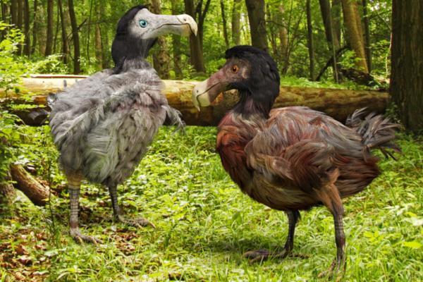 Extinción de especies: qué es, causas y consecuencias - Ejemplos de especies extintas