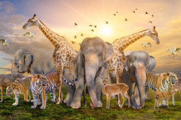 Extinción de especies: qué es, causas y consecuencias