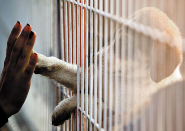 Por qué adoptar y no comprar animales