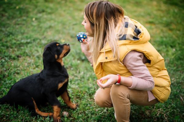 Por qué adoptar y no comprar animales - Qué es una mascota y qué implica