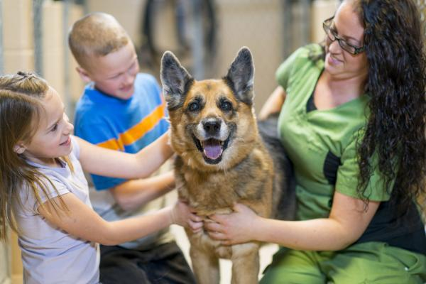Por qué adoptar y no comprar animales - Qué ventajas tiene adoptar a los animales en los refugios