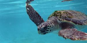 Tortugas del Mediterráneo