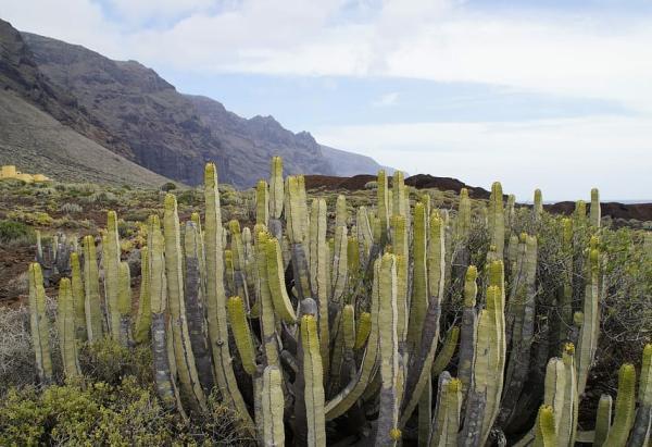 Biomas de Guatemala - Chaparral o matorral espinoso