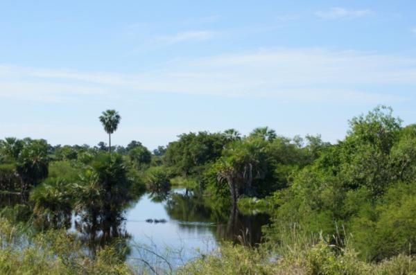 Biomas de Guatemala - Sabana tropical húmeda