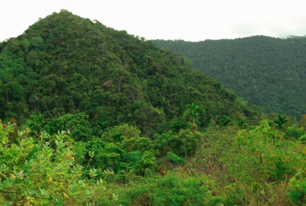 Biomas de Guatemala - Selva subtropical húmeda