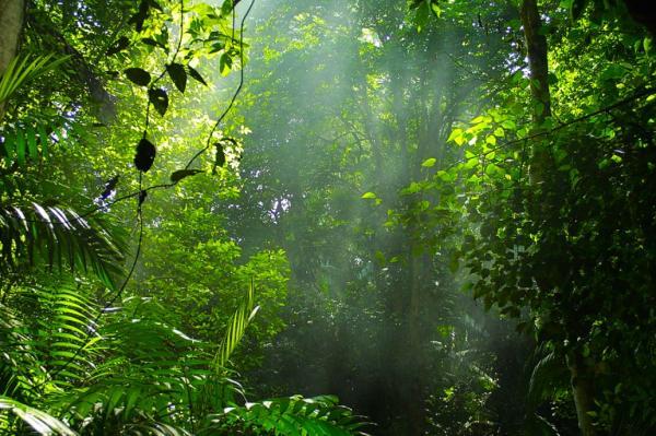 Biomas de Guatemala - Selva tropical húmeda