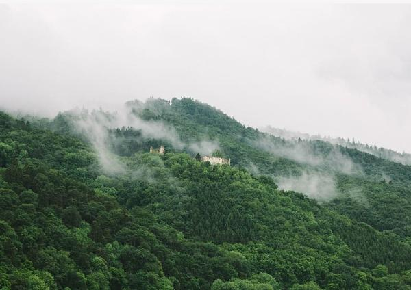 Biomas de Guatemala - Selva tropical lluviosa