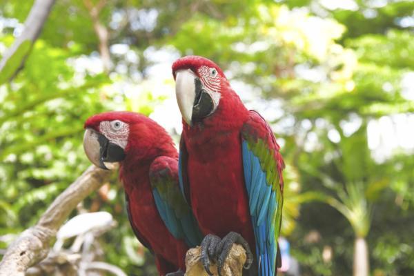 Cómo se comunican los animales - Los animales se comunican con colores y señales visuales