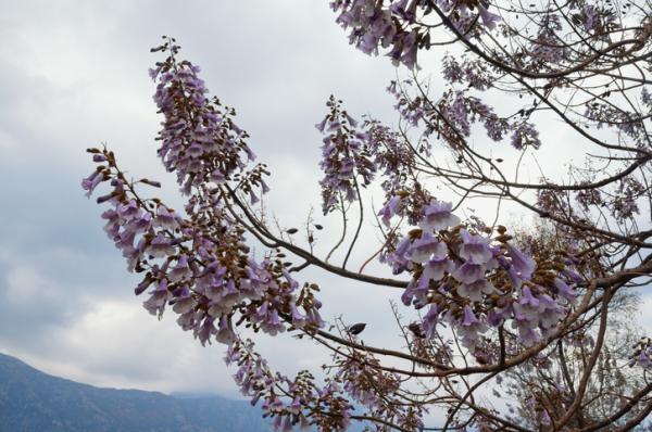 22 plantas que crecen rápido - Árboles que crecen rápido