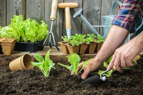22 plantas que crecen rápido - Plantas de crecimiento rápido para el huerto
