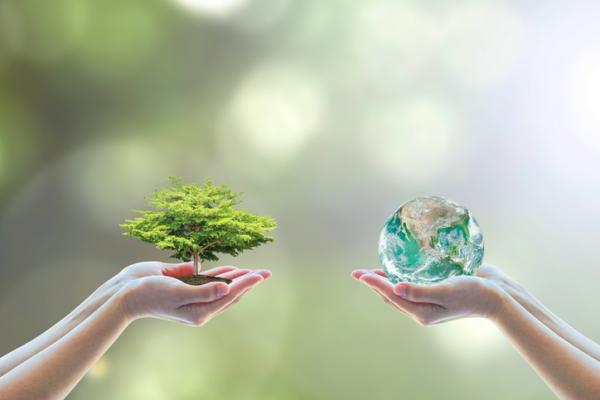 Desequilibrio ecológico: qué es, causas, consecuencias y ejemplos - Cómo evitar el desequilibrio ecológico